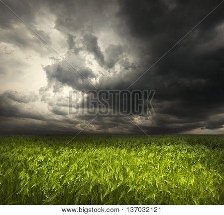 The beautiful landscape with field with green wheat and stormy sky with dark clouds