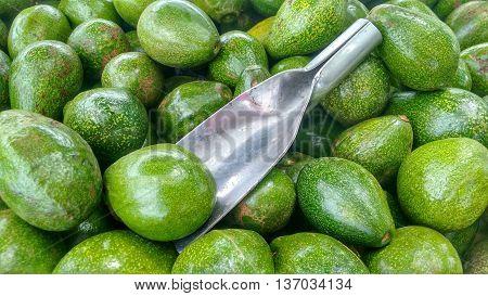 Avocado. Scoop on bunch of green avocados.