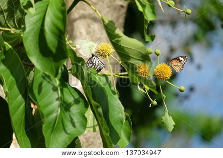 yellow flower and butterfly in the garden
