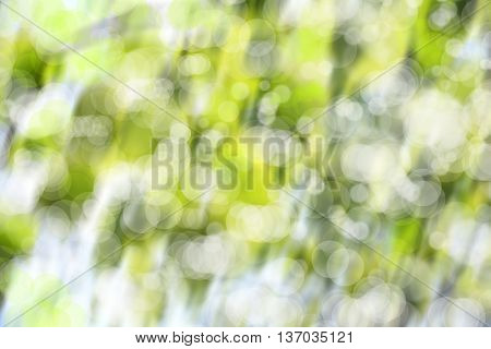 abstract background image from forest