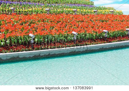 Beautiful Red Tulips In Flowers Garden.