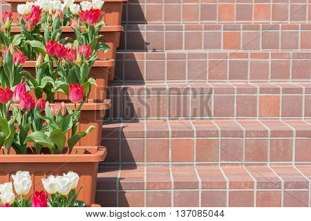 Staircase Lined With Red And White Tulips Flowers.