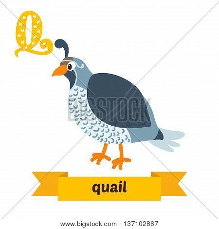 Quail. Q Letter. Cute Children Animal Alphabet In Vector. Funny Cartoon Animals
