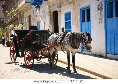 Horse and Carriage in the street in Havana Cuba poster