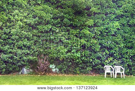 Ivy plant climbing the stone wall. Wallpaper