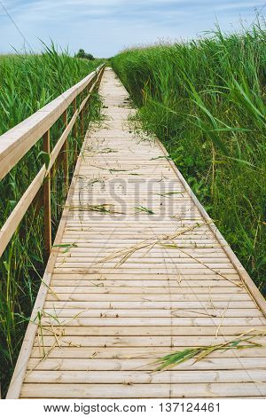 Wooden plank hiking trail leading through reed thicket vertical composition