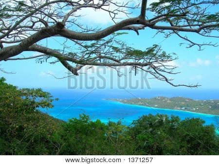 Cruise Beach With Tree