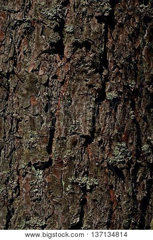 expressive, brown texture of bark in the forest