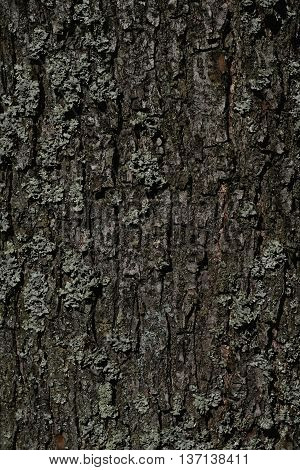 nice small brown bark in the forest