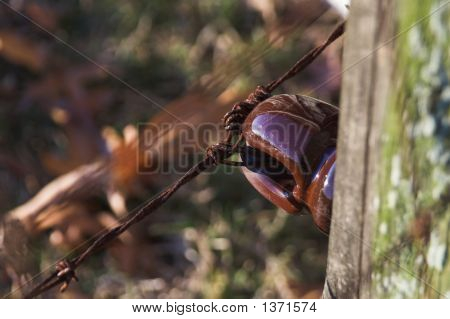 Antique Electric Fencing