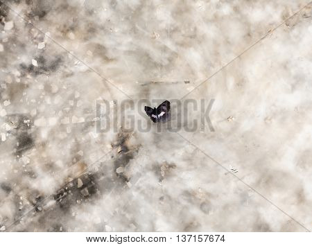 Illustration of a single butterfly in the center of a destructive storm