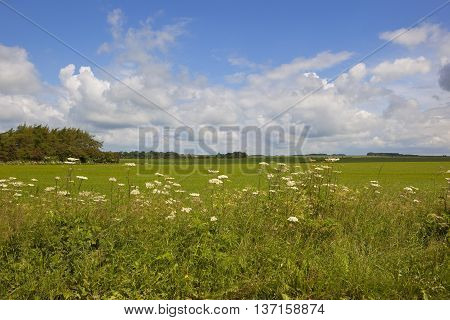 Yorkshire Wolds Wildflowers
