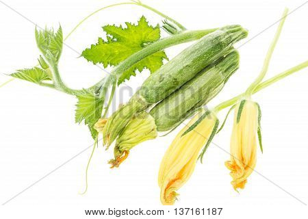 Fresh Zucchini, Green Branch With Leaves And Blossoms, On White Background.