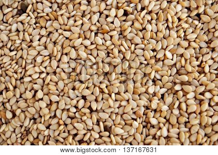 Sesame seed is considered to be the oldest oilseed crop known to humanity