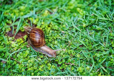 Snail Crawling On The Green Grass