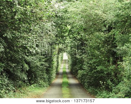 Beautiful path in a countryside surrounded by trees