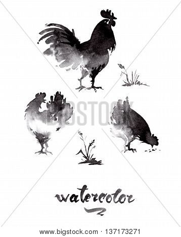 Chicken cock ink watercolor sketch brush hand drawn