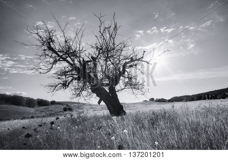 Lonely dead tree. Art nature.