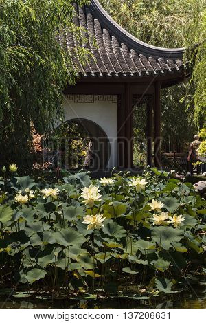 Los Angeles, California, July 2, 2016: Chinese botanical garden at the Huntington Botanical Garden with a pond and bridge in Southern California, United States. Editorial Use Only.