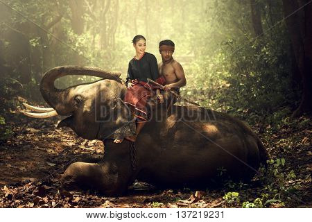 The lifestyle of the kui people A longtime relationship with the elephants. The Elephant Village in Tha Tum district Surin Thailand.