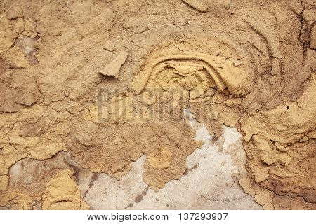 Termite nest on a sheet of gypsum
