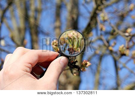 Ecologist considers a magnifying glass green shoots of the tree
