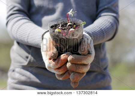 environmentalist holds a valuable green sprouts landing
