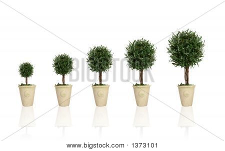 A plant gowing through different growth stages poster