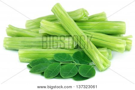 Edible moringa oleifera with green leaves over white background