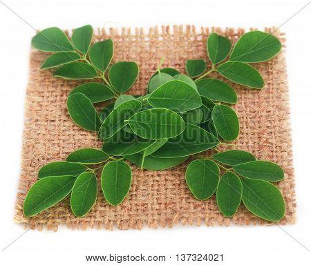 Close up of Medicinal moringa leaves on jute surface