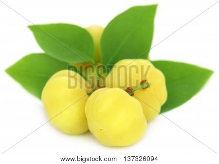 Phyllanthus acidus or Star gooseberry of Indian subcontinent