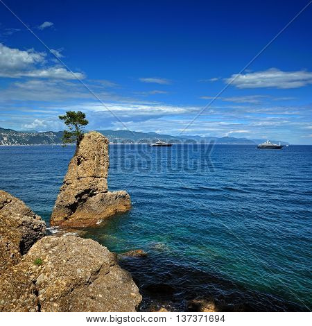Lonely pine on the rock at mediterranean sea on Italian riviera near Portofino