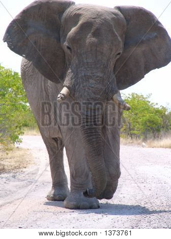 Really Big Elephant