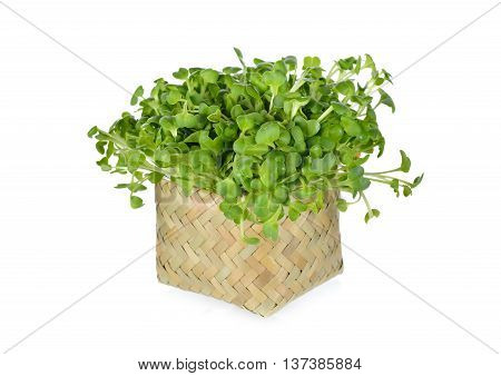 fresh radish sprouts or Kaiware Daikon in bamboo basket on white background