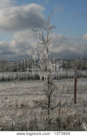 Icy Tree1