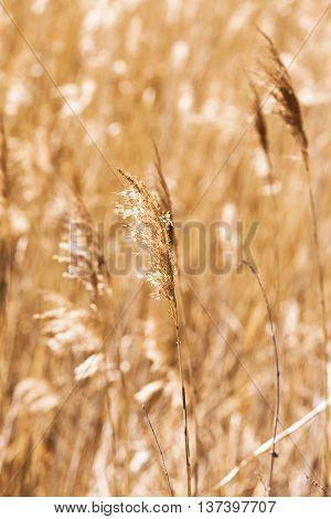 photographed close up autumn yellowed grass. autumn