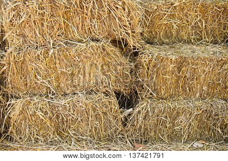 piles of straw on a farm in the wild