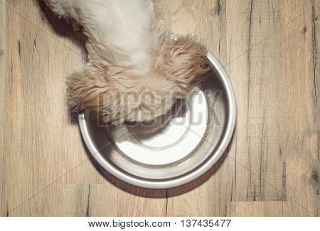 dog is hungry and eat from the bowl (head and dish on picture)
