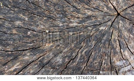 old big stub in the wood dark from time and weather conditions,  black, gray, brown shades