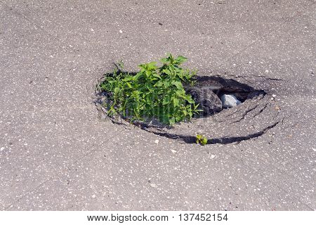 The hole in the pavement. Green grass grows in failure.