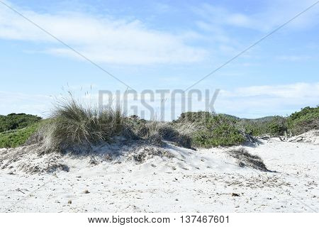 Beach dunes in the sun. Beach scene with copy space. Sand dunes with blue sea and bright sun.