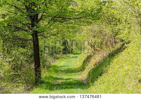 small lane in green forrest in nature