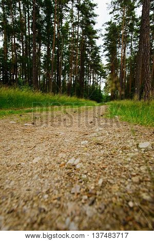 Very Low View On Path Cross A Forest
