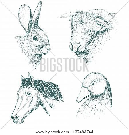Collection of farm animals .Isolated on white background.Horse, rabbit, bull and duck. Advertising design agricultural products.Vector illustration.Hand drawn style