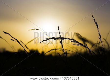 Sunset Field Sunrise Beautiful Vibrant Color. Abstract Shallow Focus. Evening Sun on dry grass.