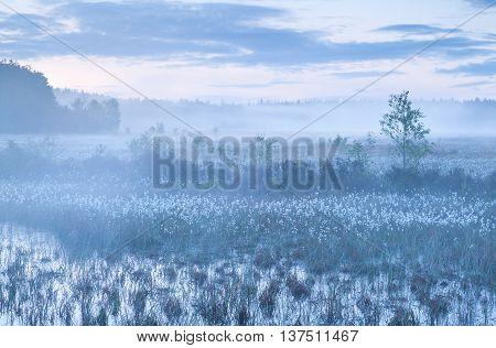 mist on swamp in morning Drenthe Netherlands