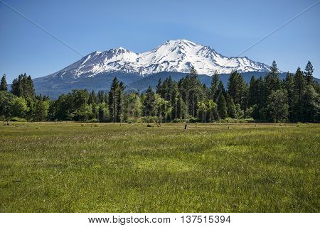 View of Mount Shasta still in snow even though it's summer after a good rainy season 2016