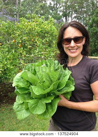 Woman holding large organic cos or romaine lettuce in her garden. Photographed in New Zealand, NZ.