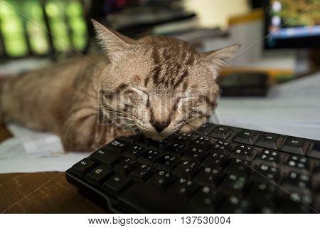Pause at work, cat sleeping on keyboard