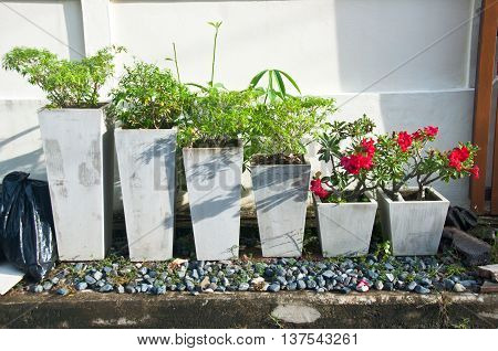 Decorated flower pot at house, mini garden